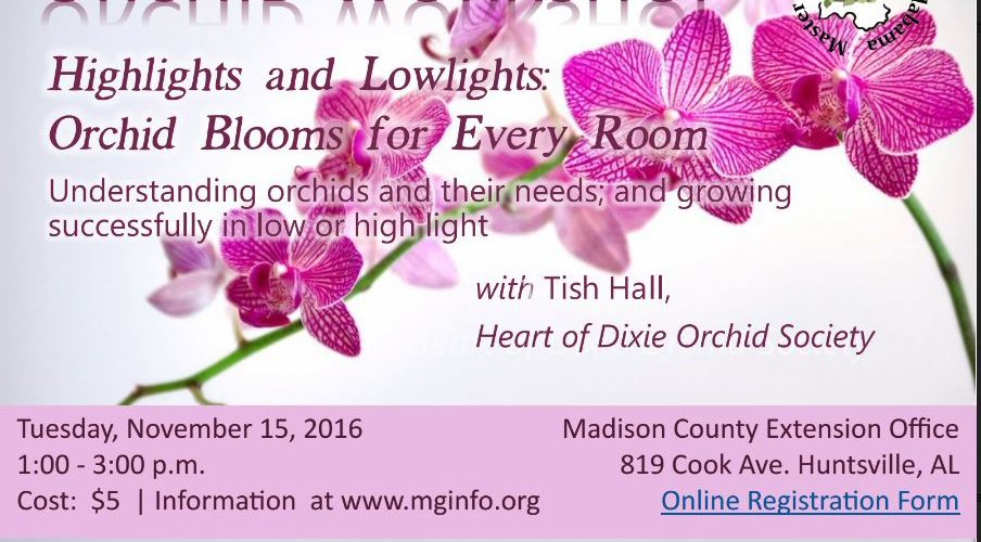 Orchid Flyer 2016